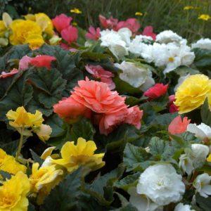 """6"""" Flowering Annuals"""