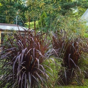 Annuals - Grasses