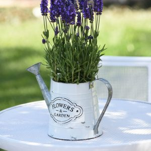Lavender Spear Blue