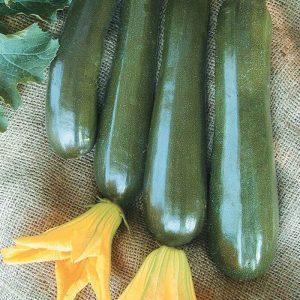 Zucchini-Onyx