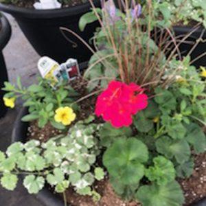 Flowering Planter Combos