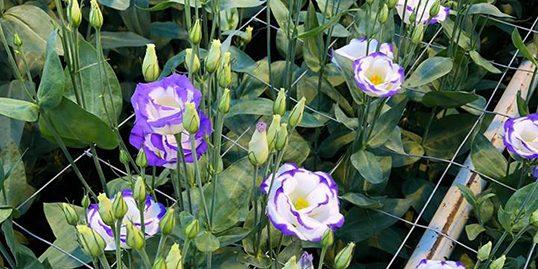 Perennials 1