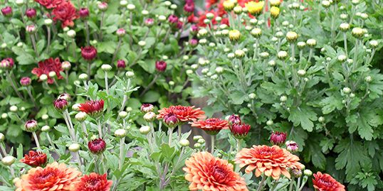 Perennials 2