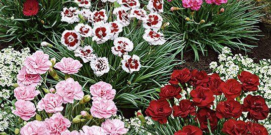 Perennials 3